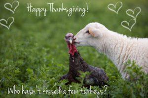 Happy Thanksgiving from PLPAA!