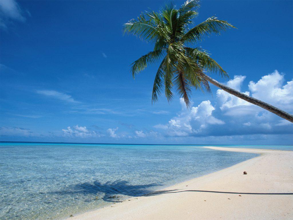 beach palm tree (2)